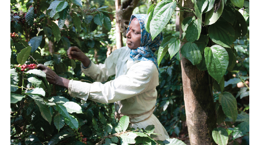 Baarbara-Berry-Coffee-Farmer