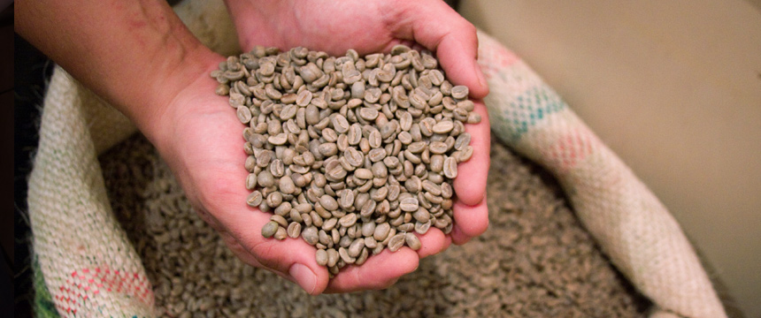 Our Coffee Beans