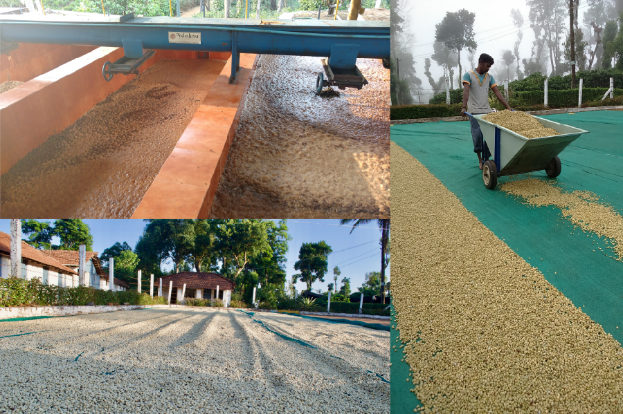 Papakuchi-Processing-Drying-Beds-Arabica-Coffee